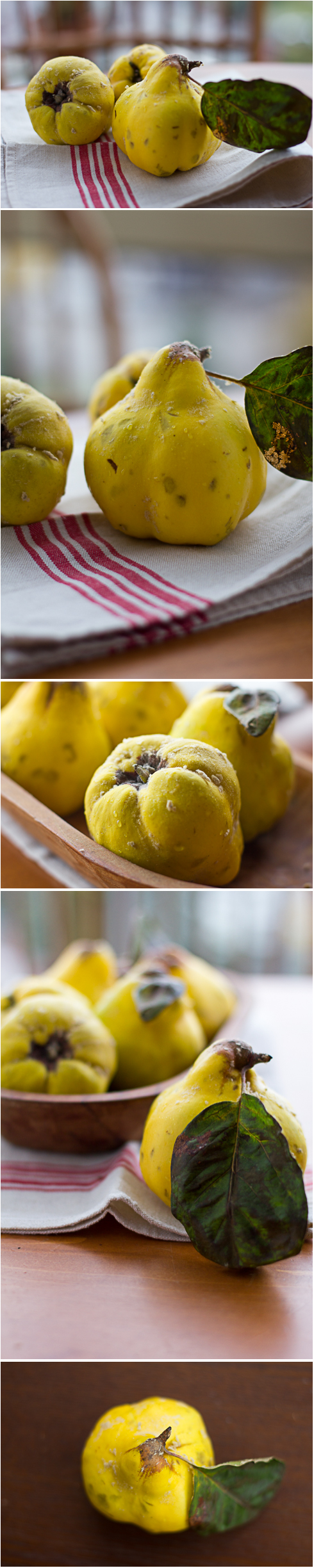 Quince. © 2011 Helena McMurdo